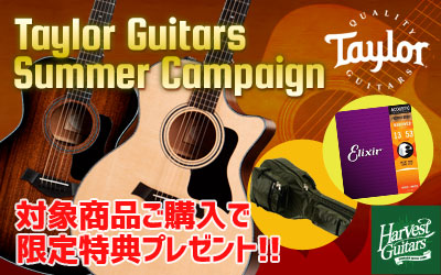 Taylor Guitars Summer Campaign